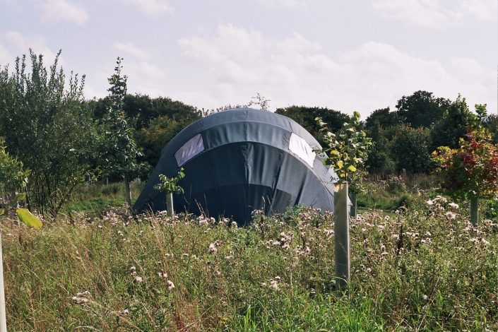 Firma Shell blending seamlessly with its surroundings